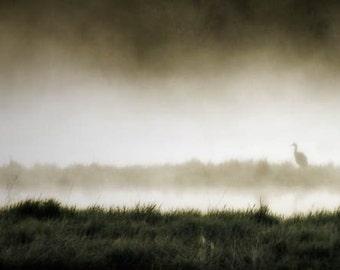 Fog photograph, mist, crane photograph, home decor, Limited Edition Fine Art Photograph 8/50 animal photography