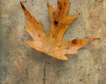 autumn decor leaf gold yellow nature photography home decor holiday gift still life photography