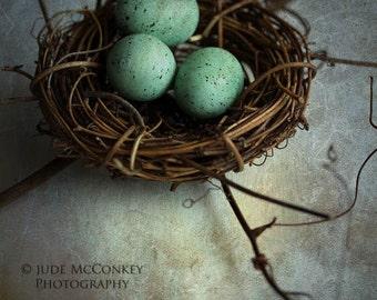 nest robins eggs still life photography home decor mothers day Spring nursery decor