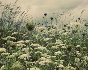 queen annes lace green botanical print clouds home decor