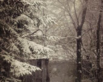 trees sepia landscape photography snow winter canvas gallery wrap office decor home decor