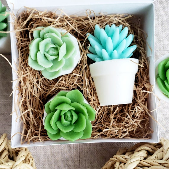 Christmas Succulent Gift Ideas.Succulent Gift Soap Gift Set Unique Gift Ideas For Women Best Friend Birthday Christmas Set Of 3 Succulents Handmade Soap