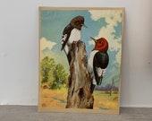 vintage woodpecker artists print- Jacob Bates Abbott