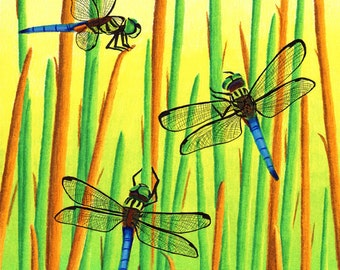 The Dragonfly Meeting 8x10 Print