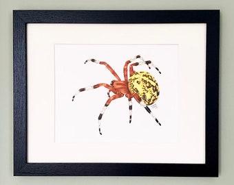 Marbled Orb Weaver Pumpkin Spider- Framed original drawing