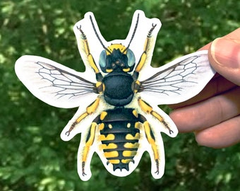 Wool Carder Bee Sticker, Native Bee Decal, Anthidium
