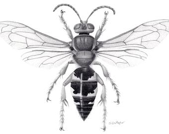 """Eastern Cicada Killer 8""""x10"""" Print B&W"""