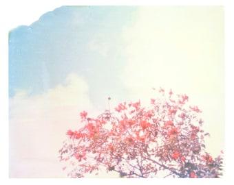 "Orange Flowers Clouds  Sky Puerto Rico Matt Schwartz Print 11""x14"""