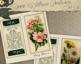 Instant Download Printable Wildflower Identification Cards for Nature Journals Art Journaling Scrapbooking Lapbooks School Projects Collage