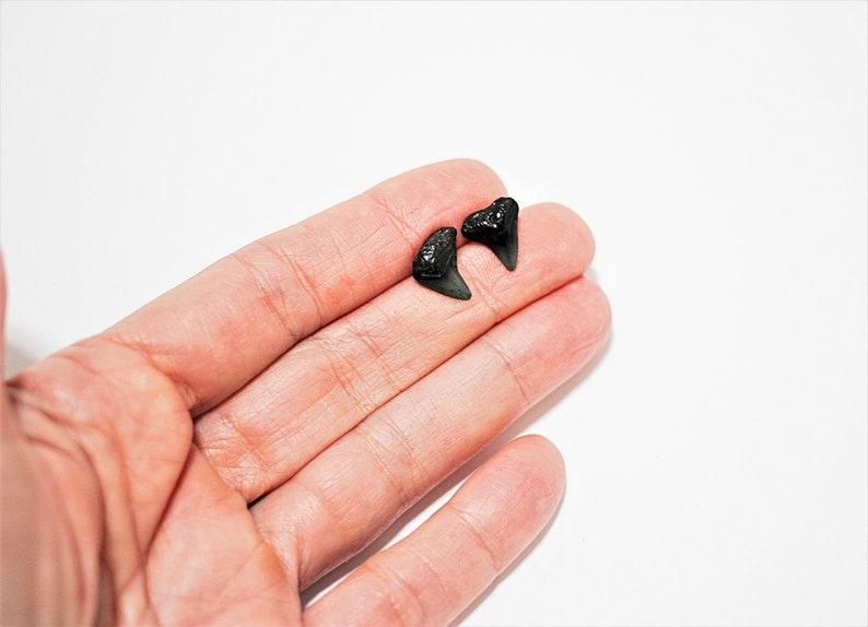 Small Black Shark Teeth Post Earrings Fossil Stud Earrings image 0