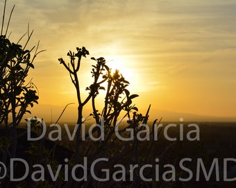 David Garcia SMD Photography - Sunrise in Palm Springs