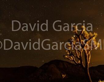 David Garcia SMD Photography - Joshua Tree Under The Milky Way