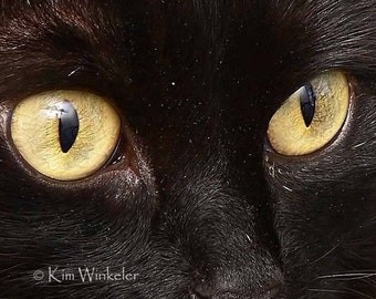 The Eye is the Window of the Soul 5x7 Fine Art Photograph