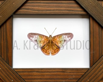 Original Butterfly Watercolor Painting Art Print, Hackberry Butterfly Artwork, Woodland Butterfly Art, Lepidopterology Art Prints