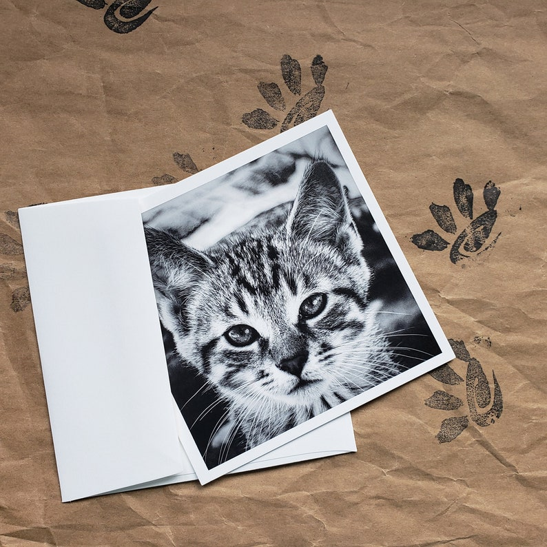 Maximusbolo/'s photo \u201cBaby Catto\u201d in a set of 5x5 Postcards and Envelopes. 5