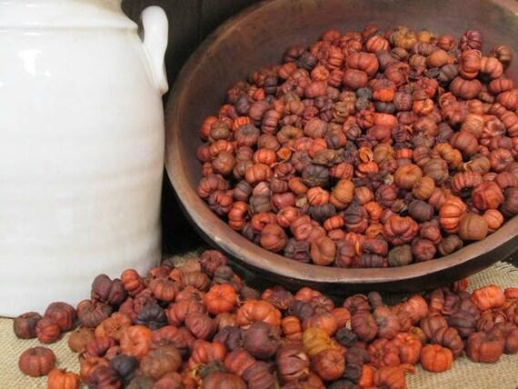 Putka Pods/Mini Pumpkins~ Pumpkin Spice Scented