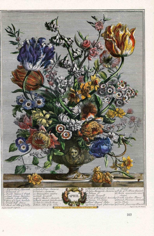 Avril Fleurs Art Print Furber 12 Mois De Fleurs Des Années 1700 Casteels Fletcher Illustration Florale Mariage Anniversaire Bébé Cadeau 7 X