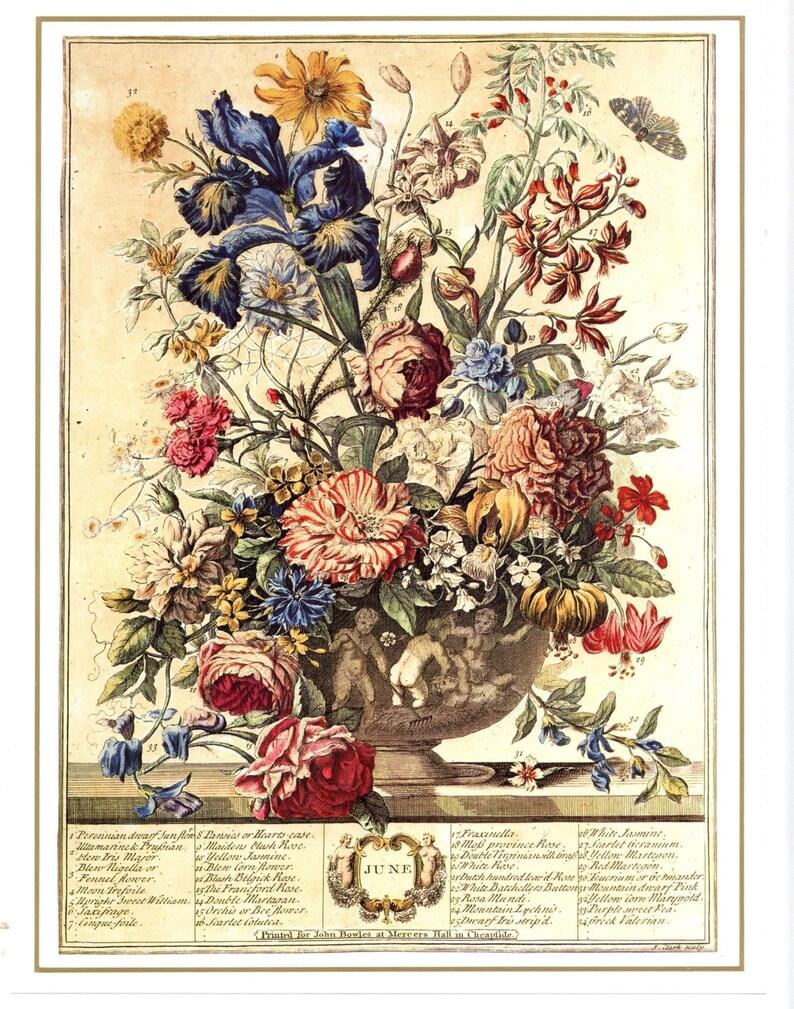 94dc83d48 Complete Set 12 MONTH of FLOWERS Art Prints 1700s Botanical | Etsy