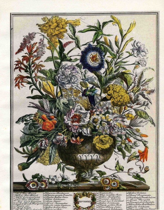 September Flowers Art Print Furber 12 Months Of Flowers Etsy