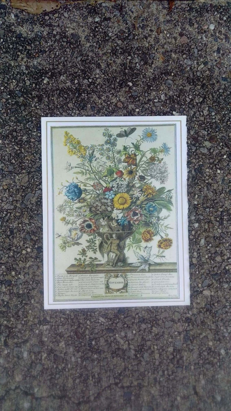 November Flowers Art Print 12 MONTHS of FLOWERS 1700s image 0