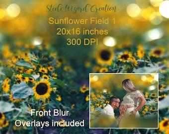 Sunflower Backdrop, Digital Background, Summer Backdrop, Flower Overlay, Photography Background, Flower Field Backdrop, Download