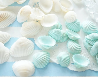 10pcs  Resin inclusions / inserts / supplies   Real Seashell AA071