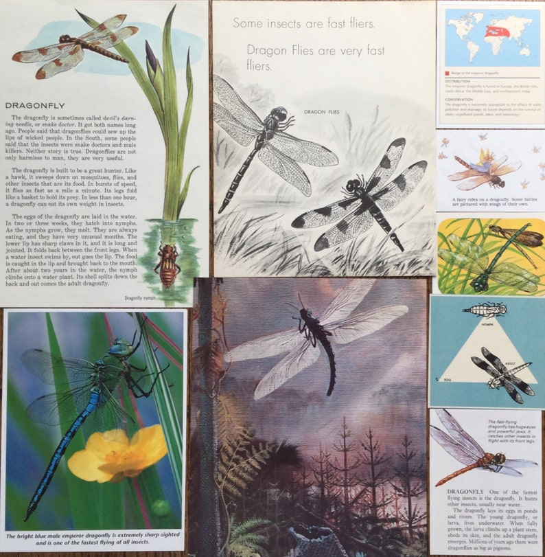 Scrapbook and Planner Kit Number 2023 Dragonflies at the Pond Vintage Dragonfly Insect Collage