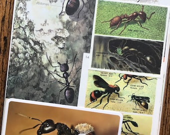 Ant Farm Vintage Nature and Science Collage, Scrapbook and Planner Kit Number 2580