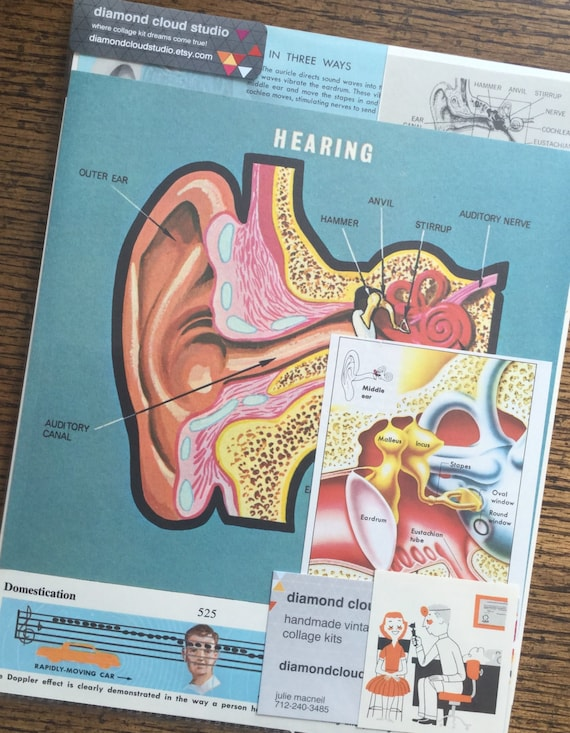 Weird Science Human Ear And Hearing Vintage Anatomy And Doctor Etsy