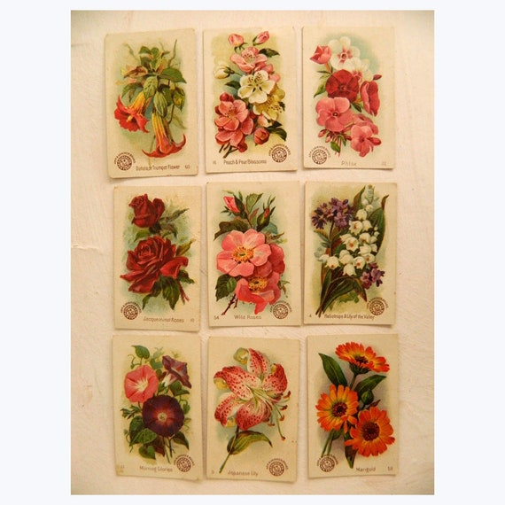 Collection of 9 Arm & Hammer Vintage Color Litho Beautiful Flower Cards