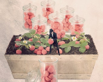 Fun Strawberry candy photography, funny food art, sweet themed photography, Tiny trades print