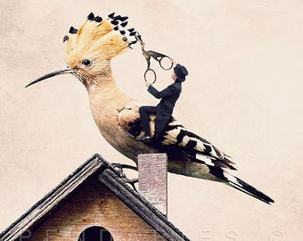 Hoopoe hairdresser photo, bird photo, gift for ornithologist, hairdressing salon decoration, decoration birds, deco for hairdressers