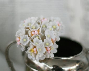 Cream forget me not flowers