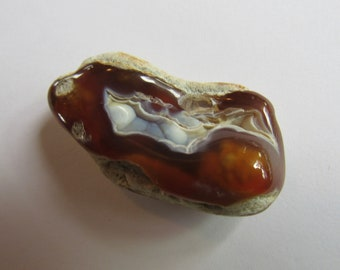 Agatized Volcanic Polished Slice Natural Hole Fossil 2 Inch Chalcedony Agate Britz Beads Supply Tampa Bay Coral Rock Specimen