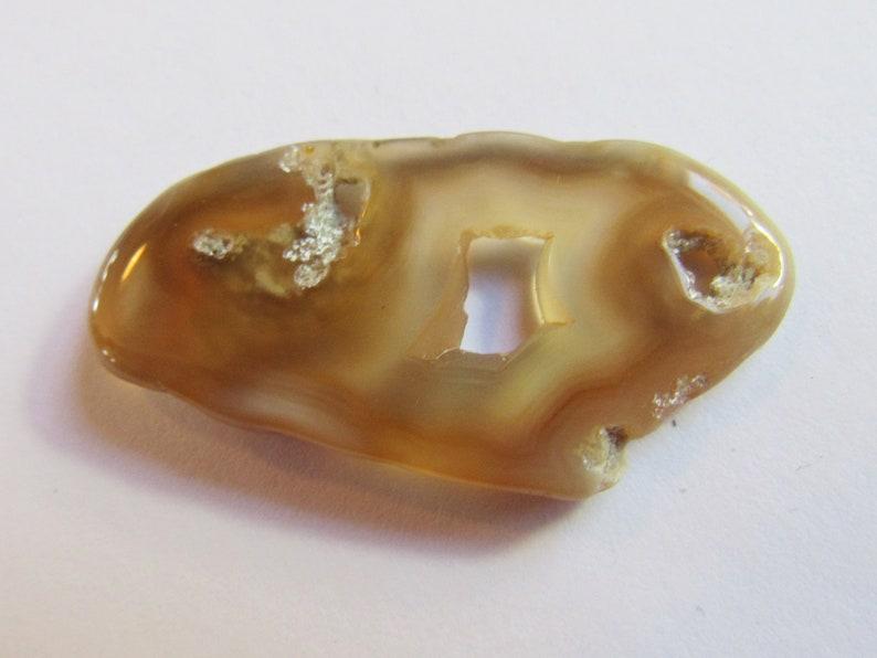 Translucent Specimen Flat Oval Translucent Rock Agatized 1 12 Inch Slice Tampa Bay Coral Britz Beads Supply Natural Hole Pendant