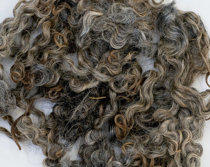 Gotlands Sheep Wool Curls 3,5 oz - 100 gr Unwashed Natural Locks for Hand Spinning Felting Decorating, Gray