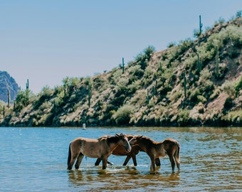 Wild Horses of the Salt River Fine Art Print #1
