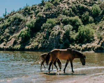 Wild Horses of the Salt River Fine Art Print #4