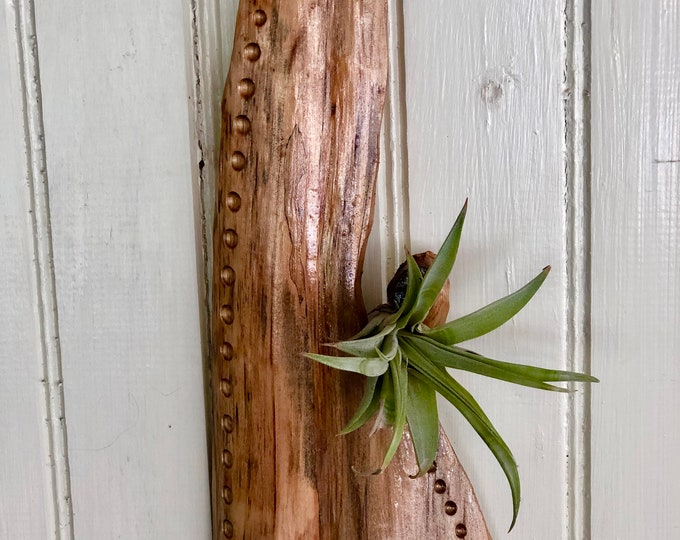 Airplant Wallhanging #15