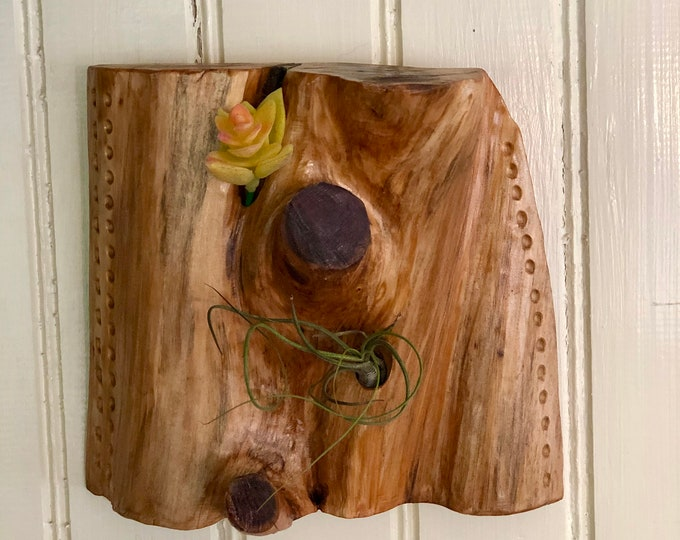 Airplant Wallhanging #11