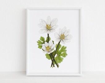 Bloodroot - Michigan Botanical Watercolor Series Art Print