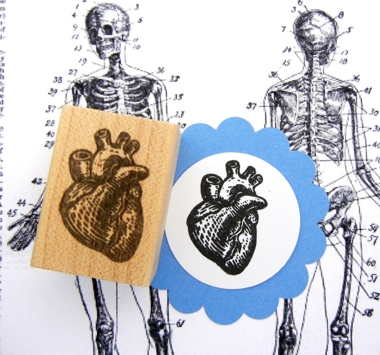 Sello corazón anatómico sello hecho a mano por sellos de la