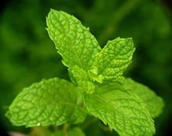 Fresh Spearmint Hydrosol