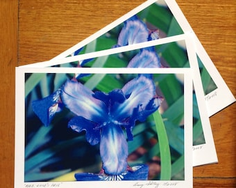 Mrs. Cooks Iris, Photo Art Card