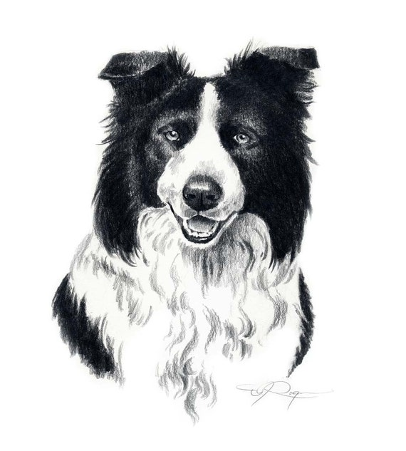 BORDER COLLIE  Dog Watercolor ART Print by Artist DJR