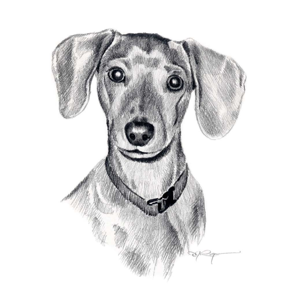 MINIATURE DACHSHUND Dog Pencil Drawing Art Print by Artist ...