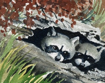 RACCOONS / HIDE OUT Watercolor Signed Fine Art Print by Artist D J Rogers