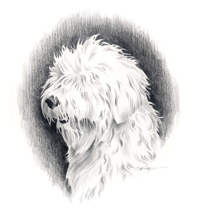 Old English Sheepdog Dog Pencil Drawing Art Print By Artist D Etsy