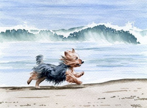 BLUE SCOTTISH TERRIER Contemporary Watercolor ART Print by Artist DJR