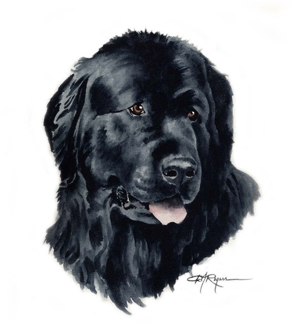 NEWFOUNDLAND Dog Drawing ART 13 X 17 LARGE by Artist DJR